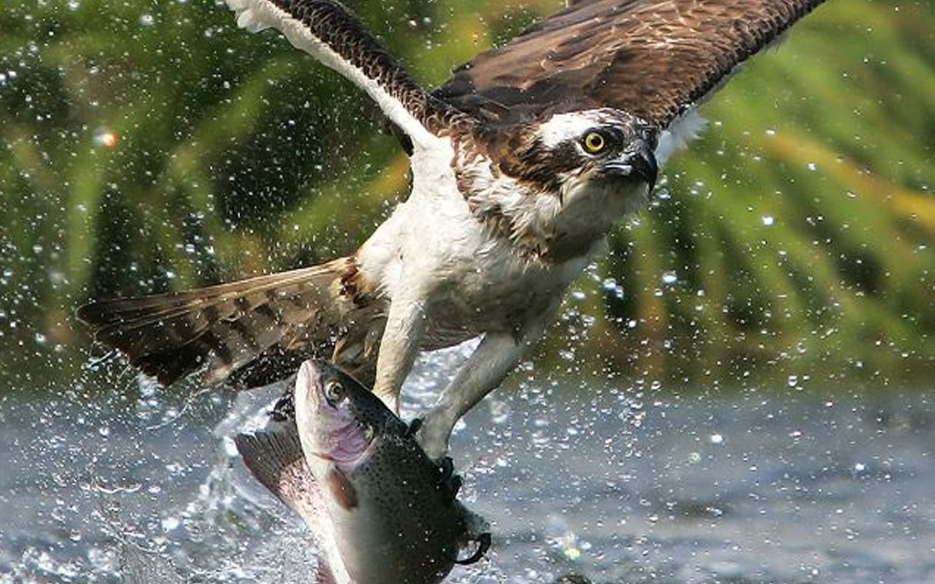 face eyes fishes hunt fishing wildlife nature wallpaper background 1920x1200