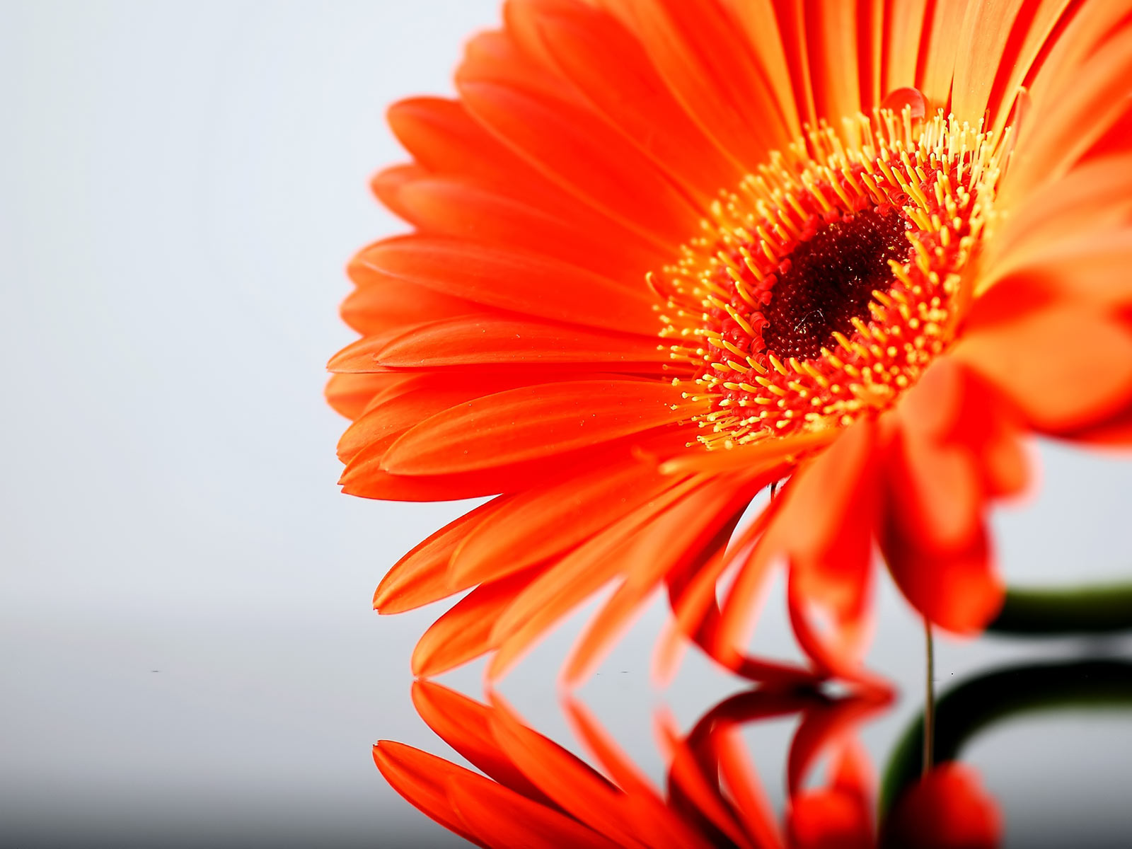 My Background Blog orange flower background 1600x1200