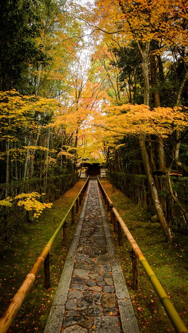 Beautiful Scenic Path iPhone 5 Wallpaper 640x1136 640x1136