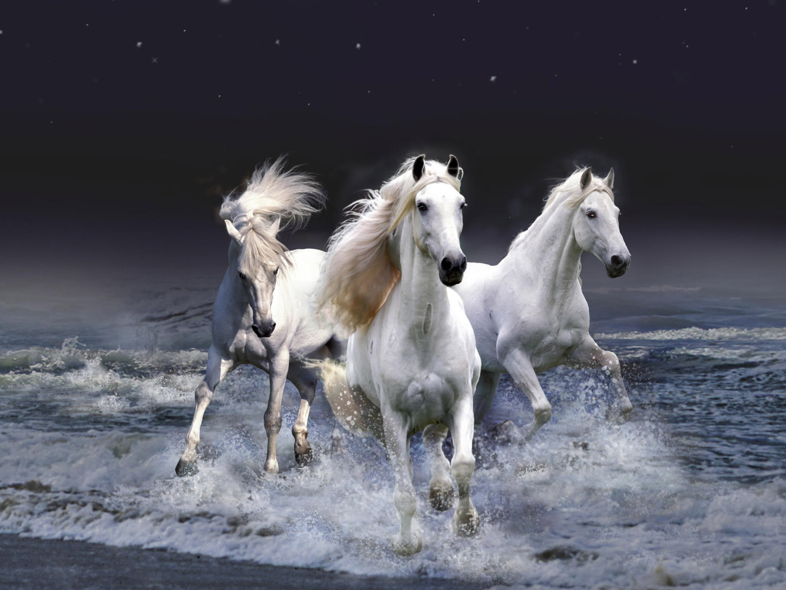 horse wallpaper arabian horse wallpaper beautiful horse wallpaper 1600x1200