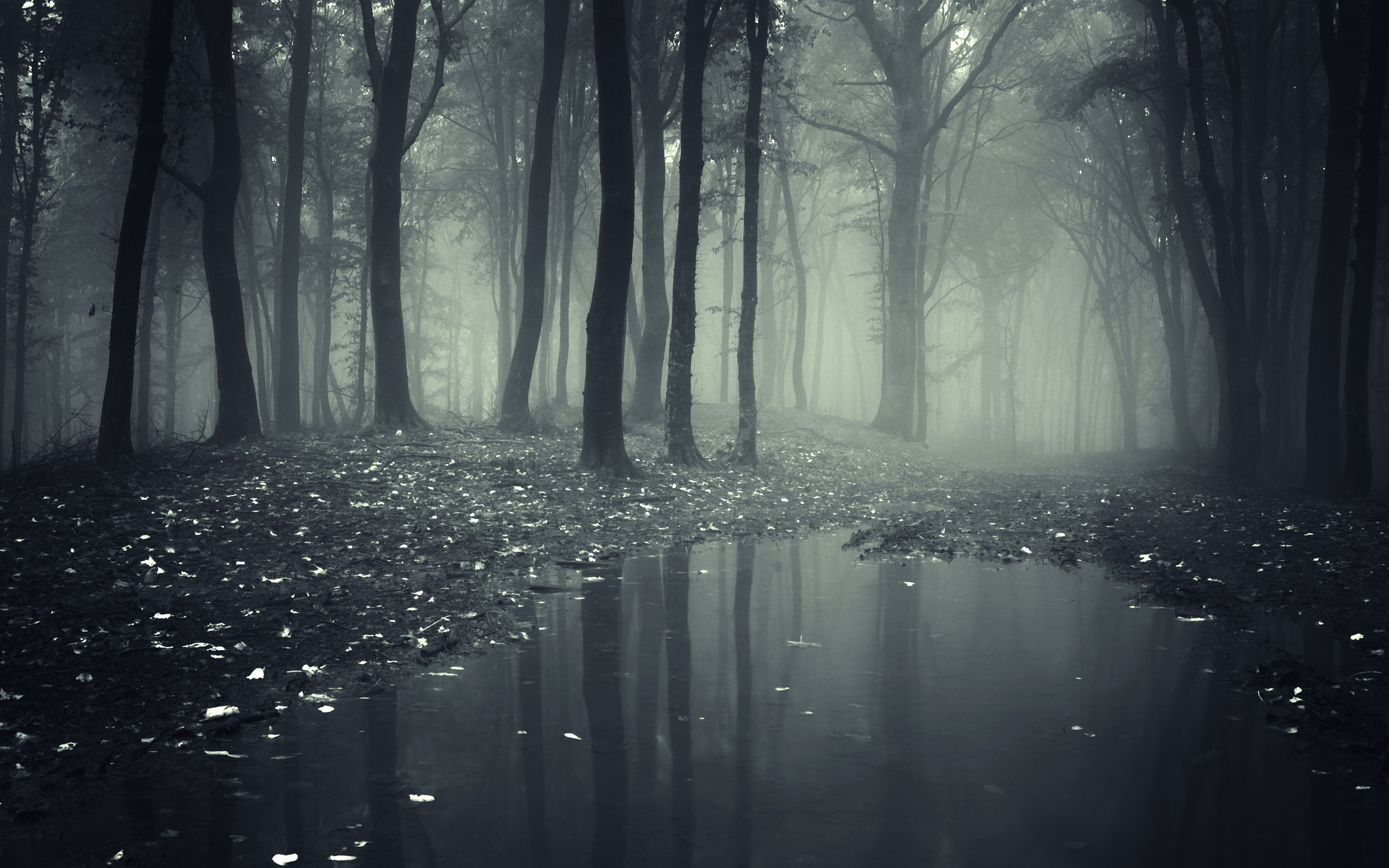 Creepy Dark Forest HD Wallpaper 2880x1800
