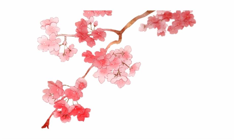 Clipart Wallpaper Blink   Anime Cherry Blossom Branch   cherry 920x550