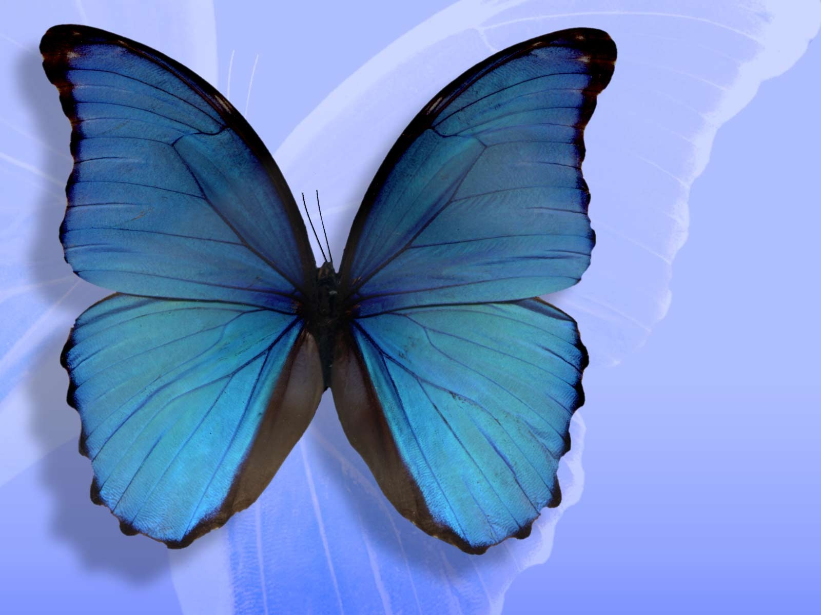 HD Butterfly Wallpapers For Desktop High Definition 1600x1200