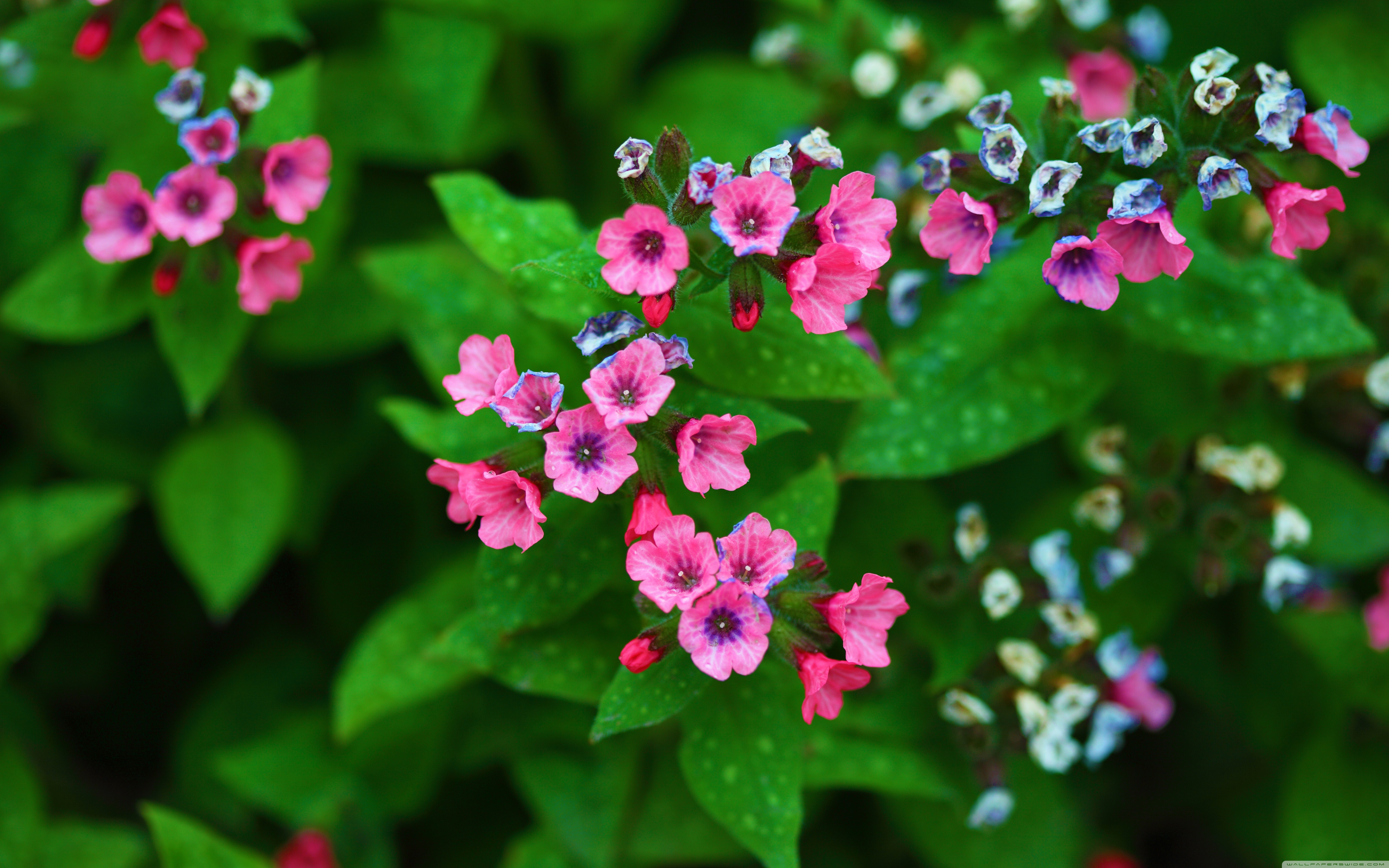 Mothers Day Screensavers Desktop: May Flowers Free Wallpaper