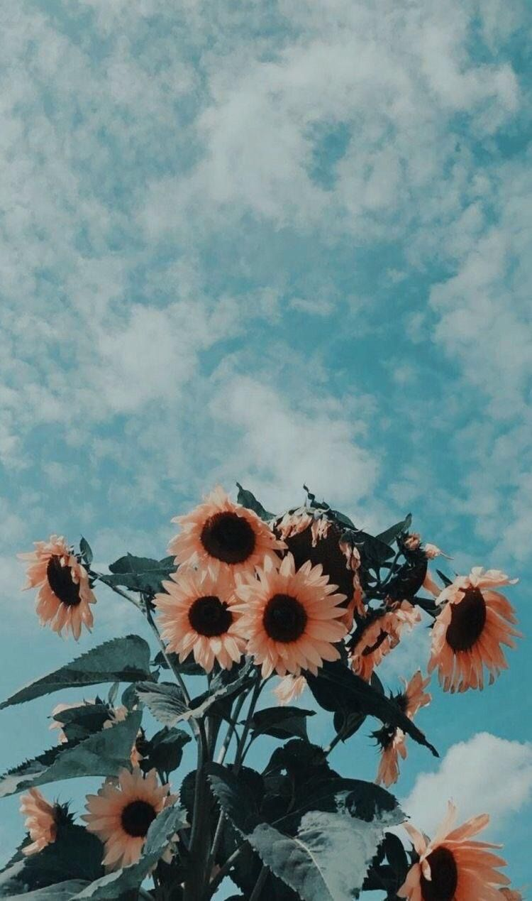 aesthetic sky flowers nature background clouds sunflower 750x1269