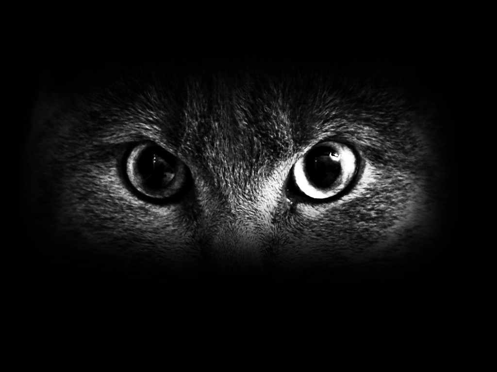Free Download Cat Eyes 1024x768 For Your Desktop Mobile