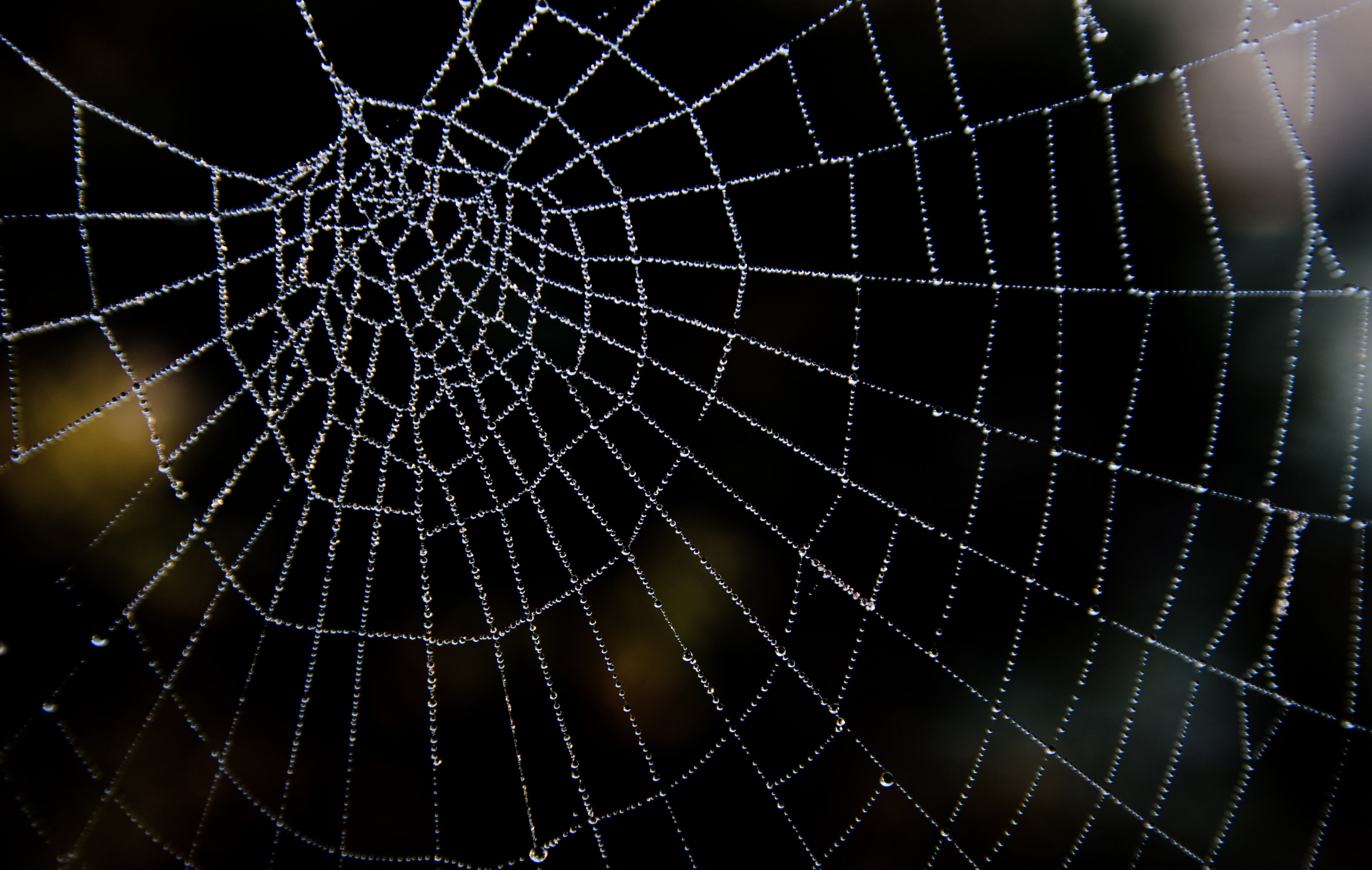 [ Images] Backgrounds Water Drop Spider Web ID 4918x3117