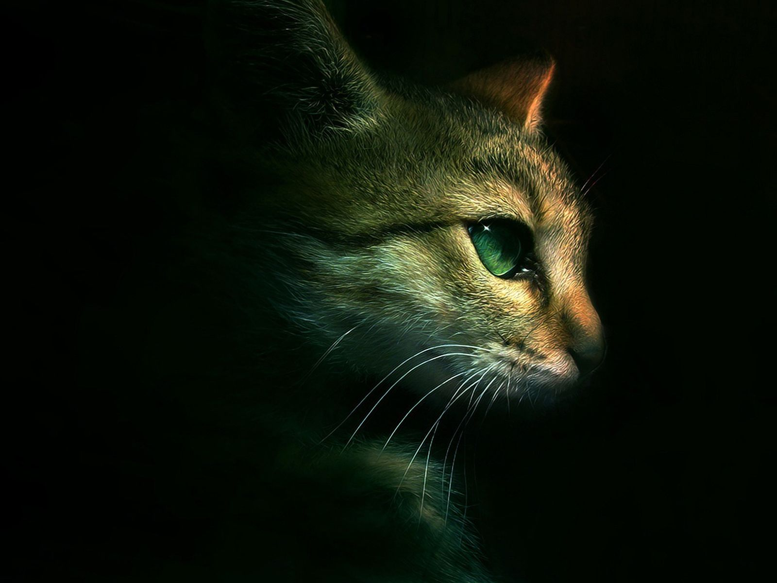 Download Warrior Cats Backgrounds 1600x1200