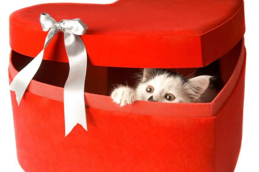 homeless cat or kitten by purchasing an Adoption Gift Certificate 851x564
