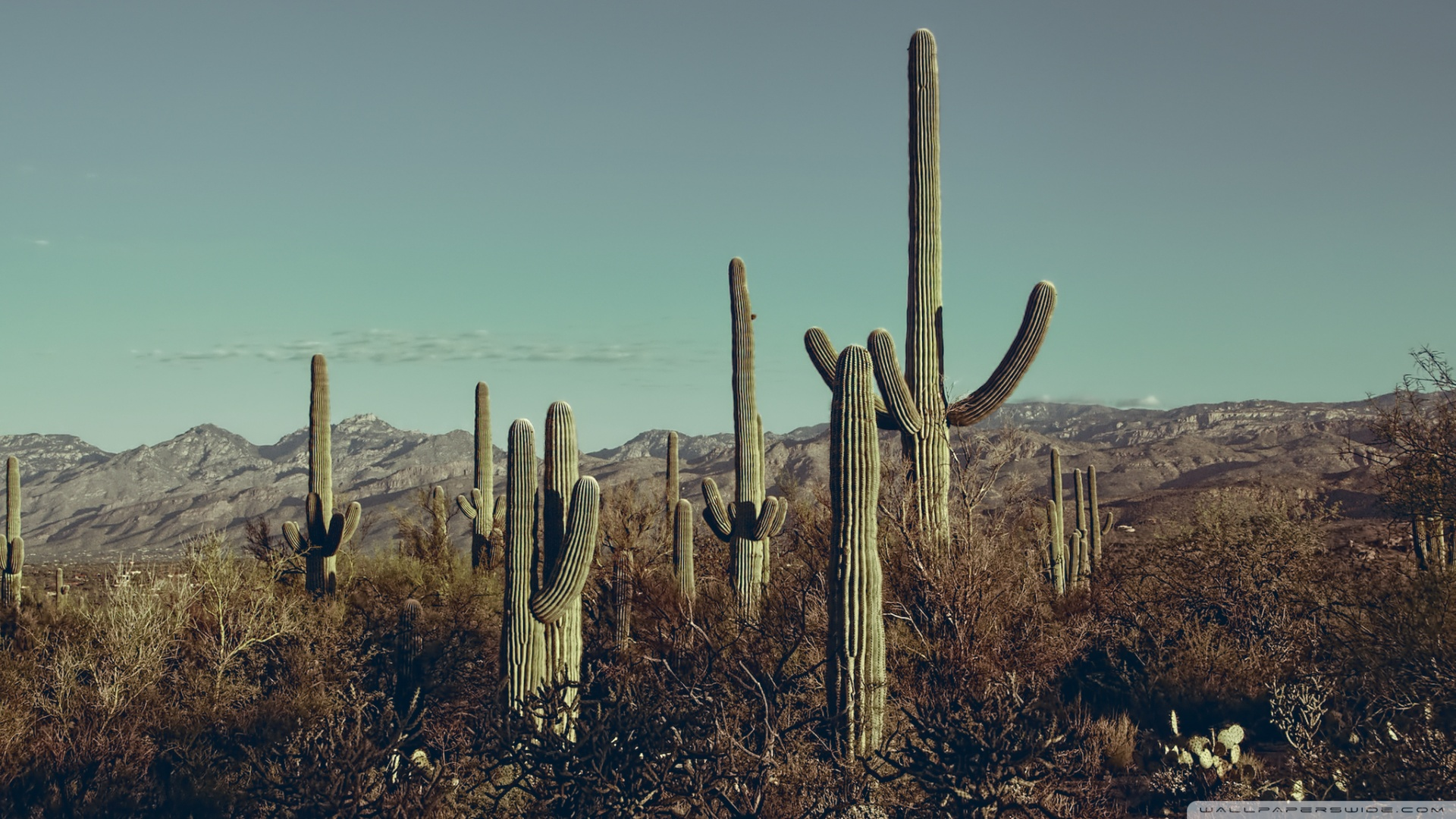Saguaro National Park East Arizona 4K HD Desktop Wallpaper for 1920x1080