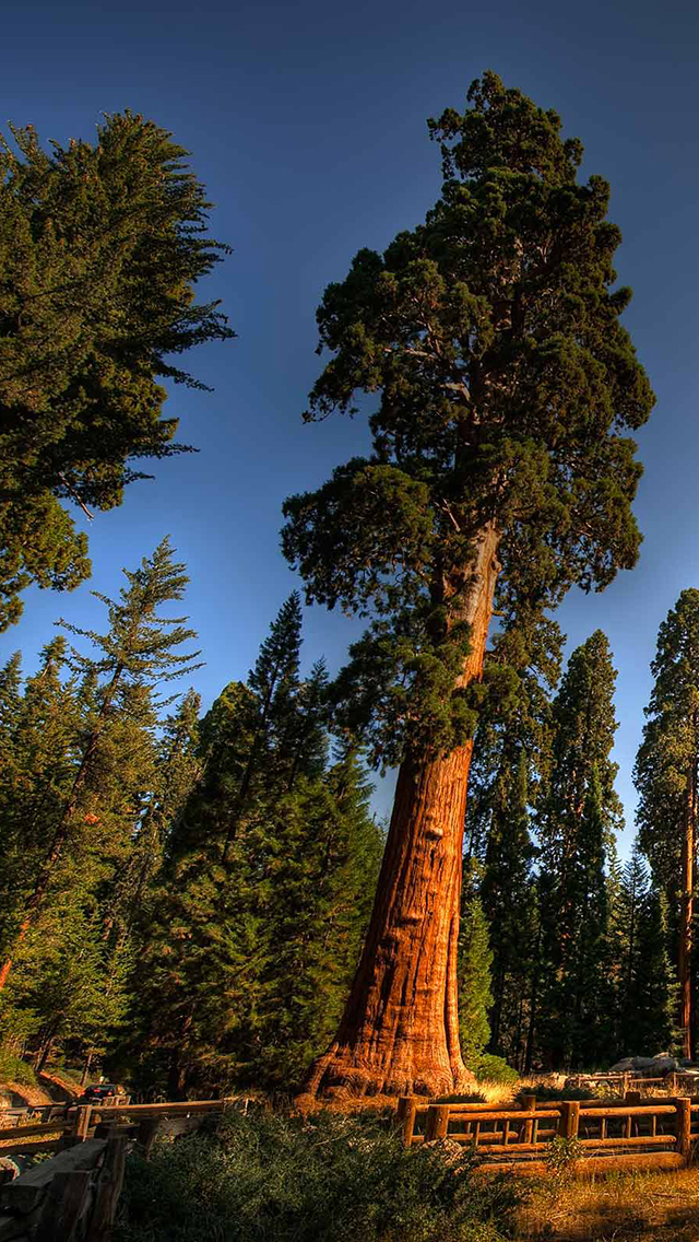 Sequoia National Park 3Wallpapers iPhone Les 3 Wallpapers iPhone du 640x1136