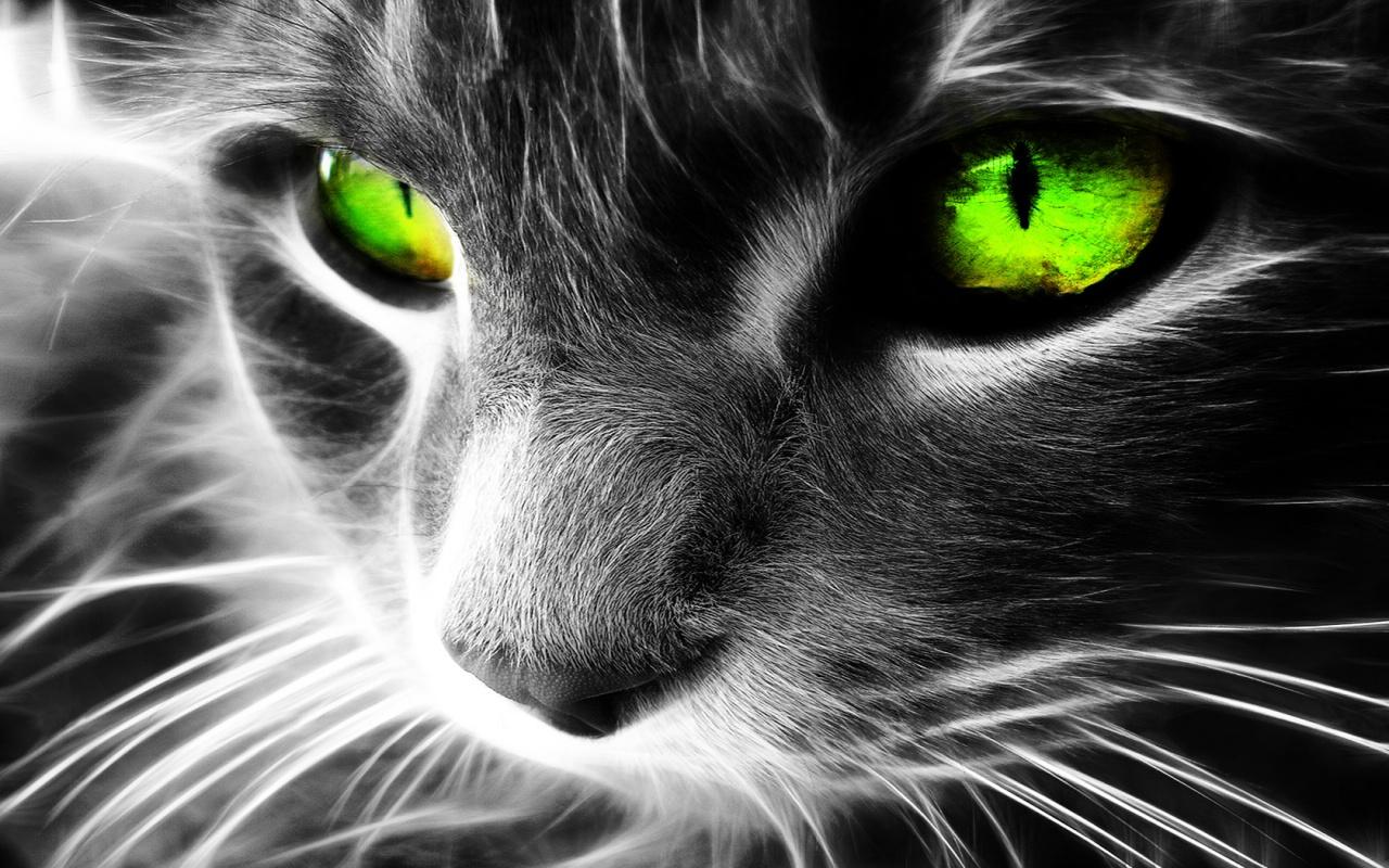 1280x800 Green eyes cat desktop PC and Mac wallpaper 1280x800
