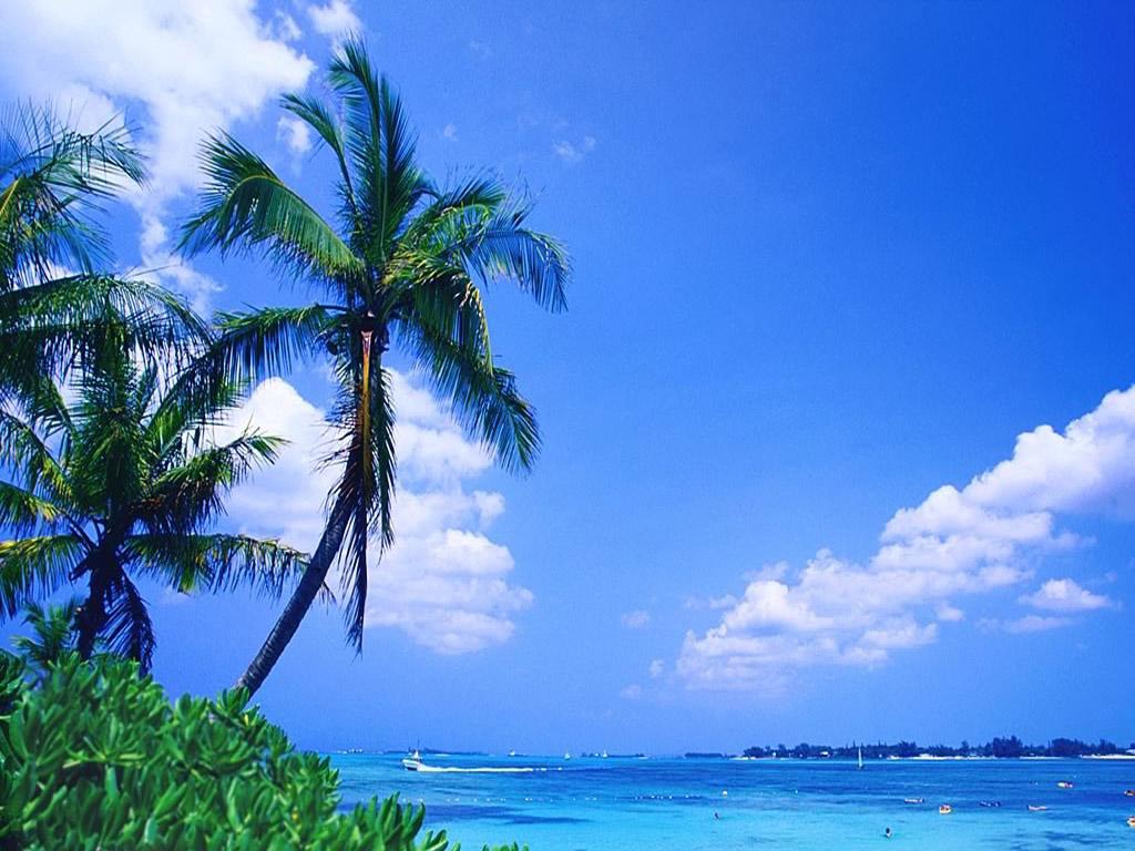 Tropical Beach Wallpaper 061 Wallpapers Desktop Wallpapers 1024x768