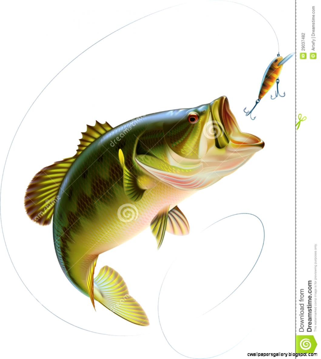 Largemouth Bass Drawing Color Wallpapers Gallery 1059x1183