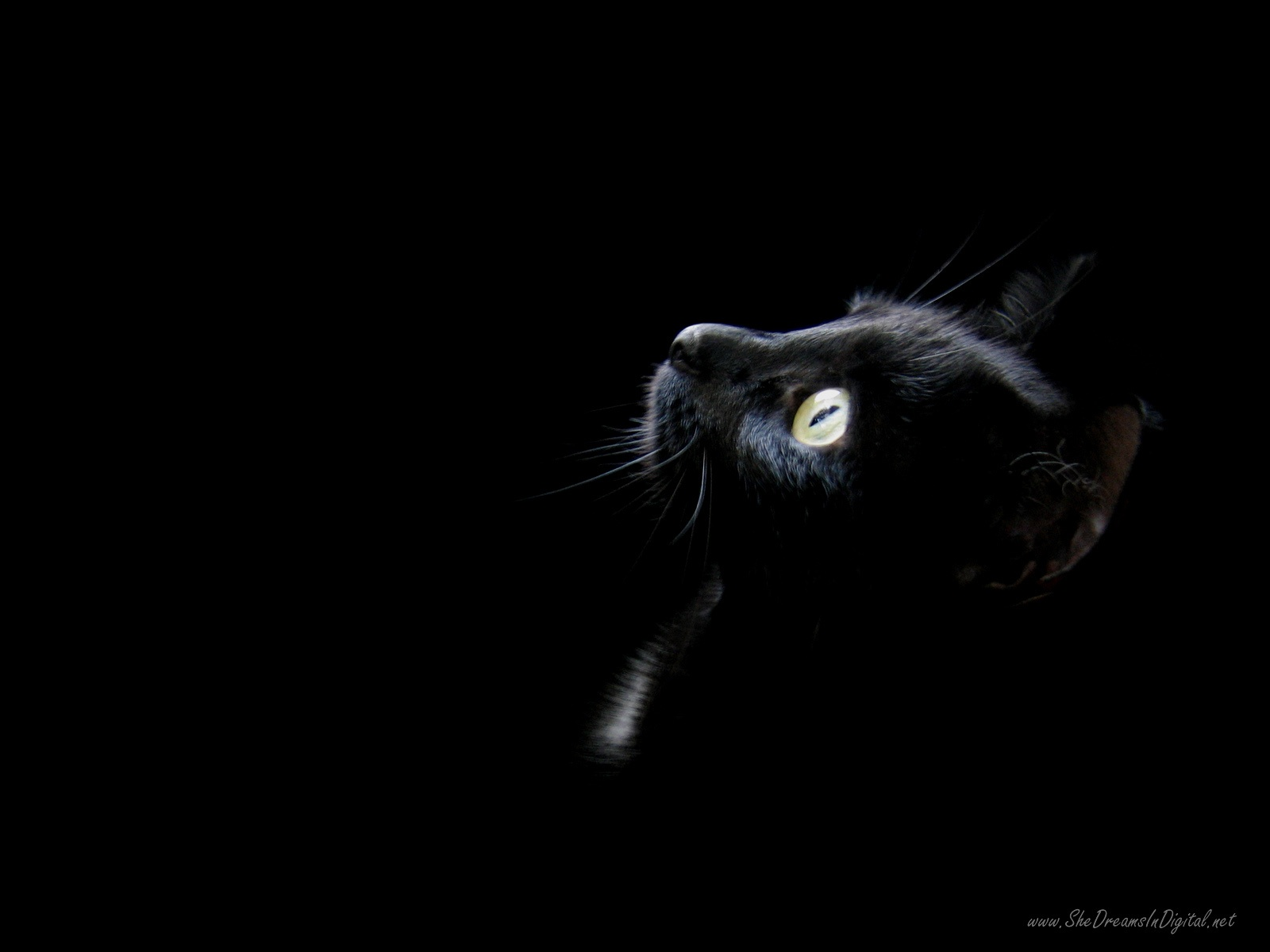 48 Black Cat Screensavers And Wallpaper On Wallpapersafari