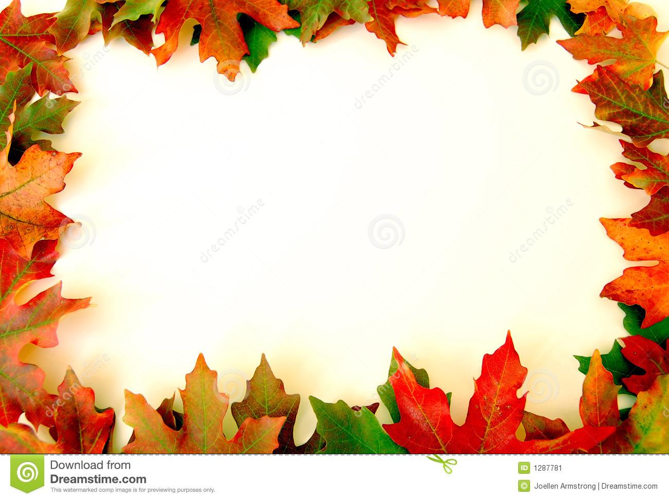 Autumn leaves on white background on border of photo 1300x972