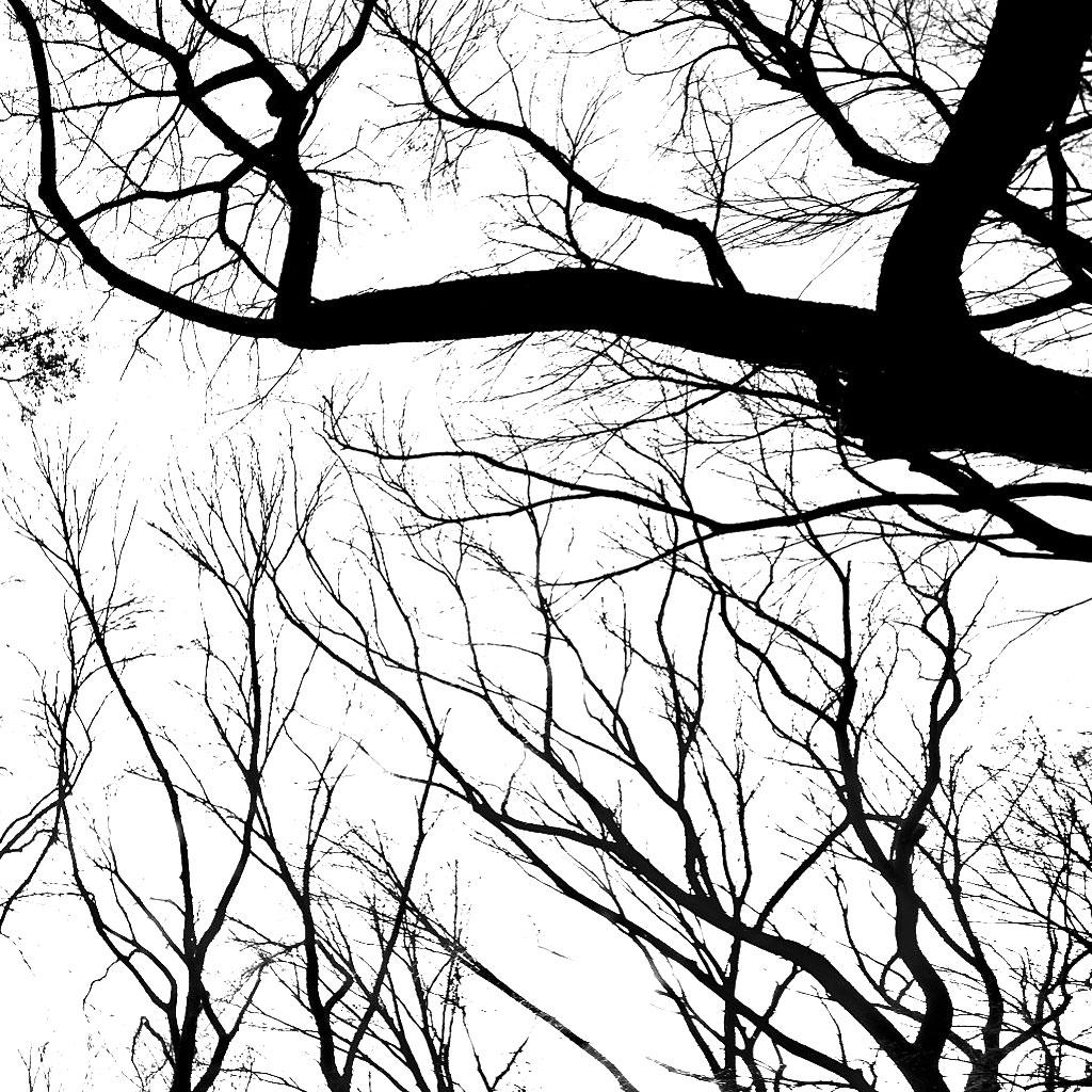 Branches iPad Wallpaper   Download iPad wallpapers 1024x1024