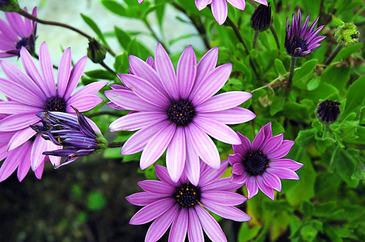 Purple Spring Flowers Wallpapers - WallpaperSafari