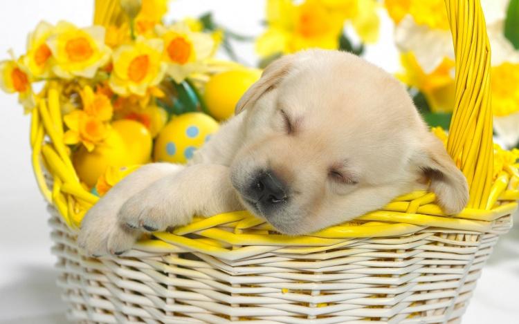 Fall Asleep In Basket Flower Wallpapers Dog Fall Asleep In Basket 750x469