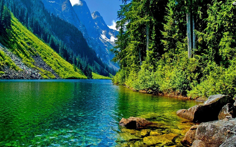 free beautiful nature green - photo #45