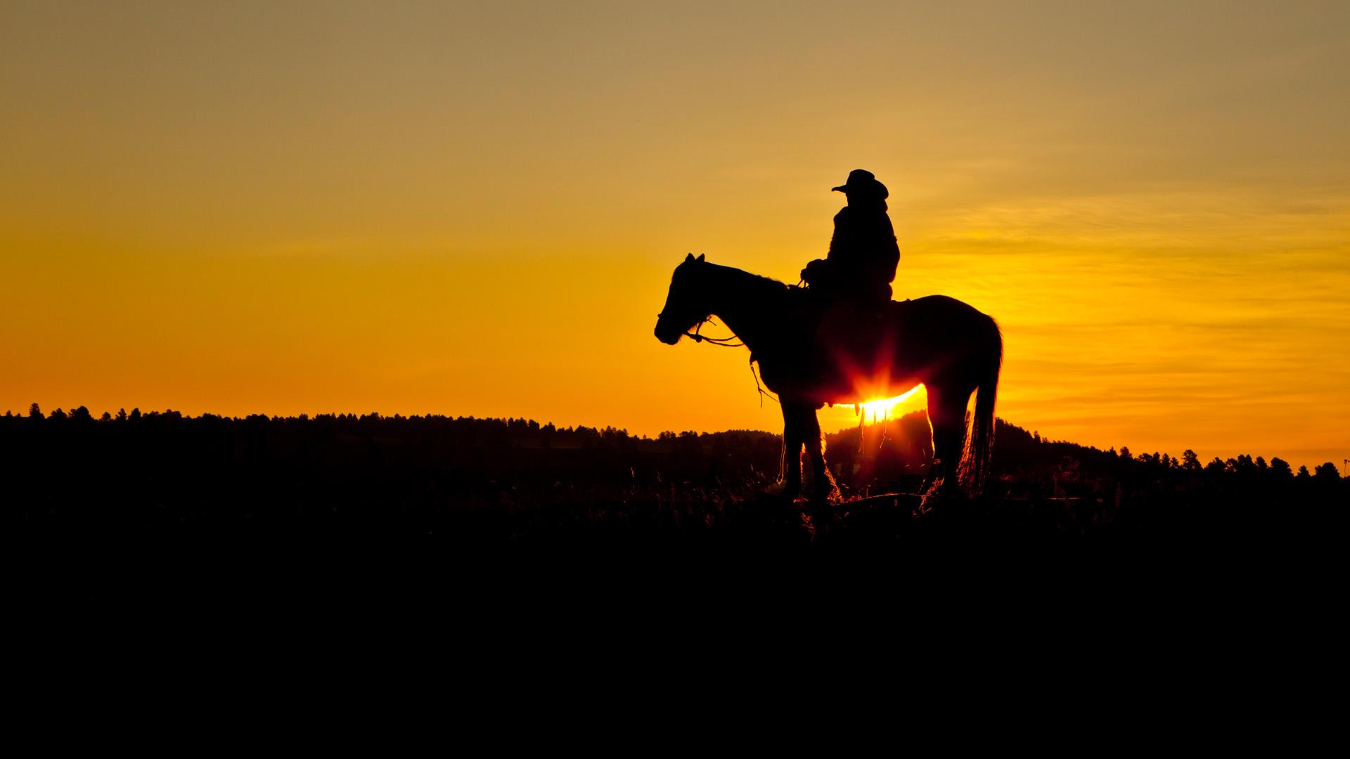 лошадь, трава, закат  № 2647  скачать