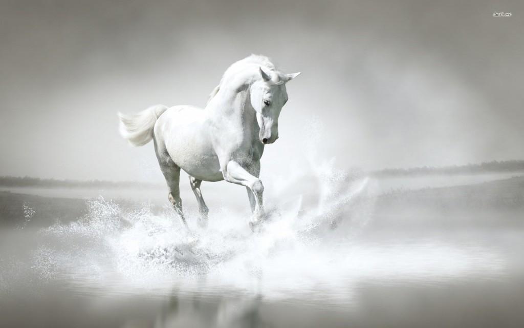 Free Download Luxury White Horse Animal Wallpaper Hd Pure White