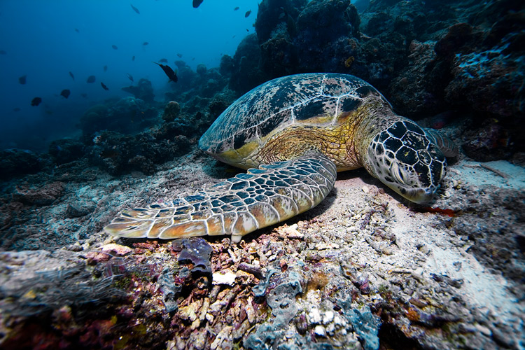 in the sea on stone ocean life view nature hd background wallpapers 750x500
