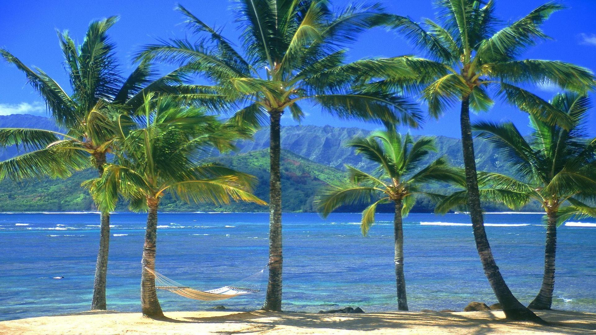54+ Hawaiian Wallpaper Desktop on WallpaperSafari