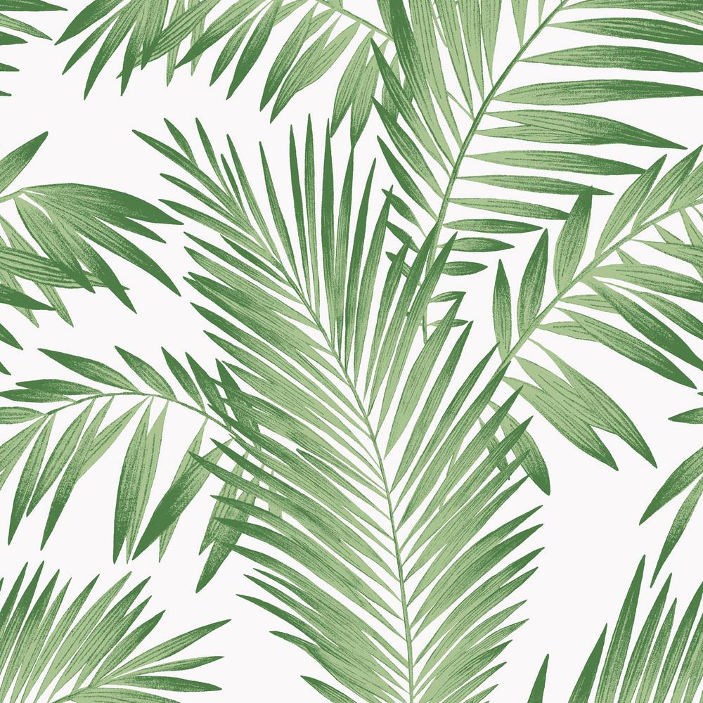 Tropical Palm Green Wallpaper   Palm Leaves Aesthetic Background 1000x1000