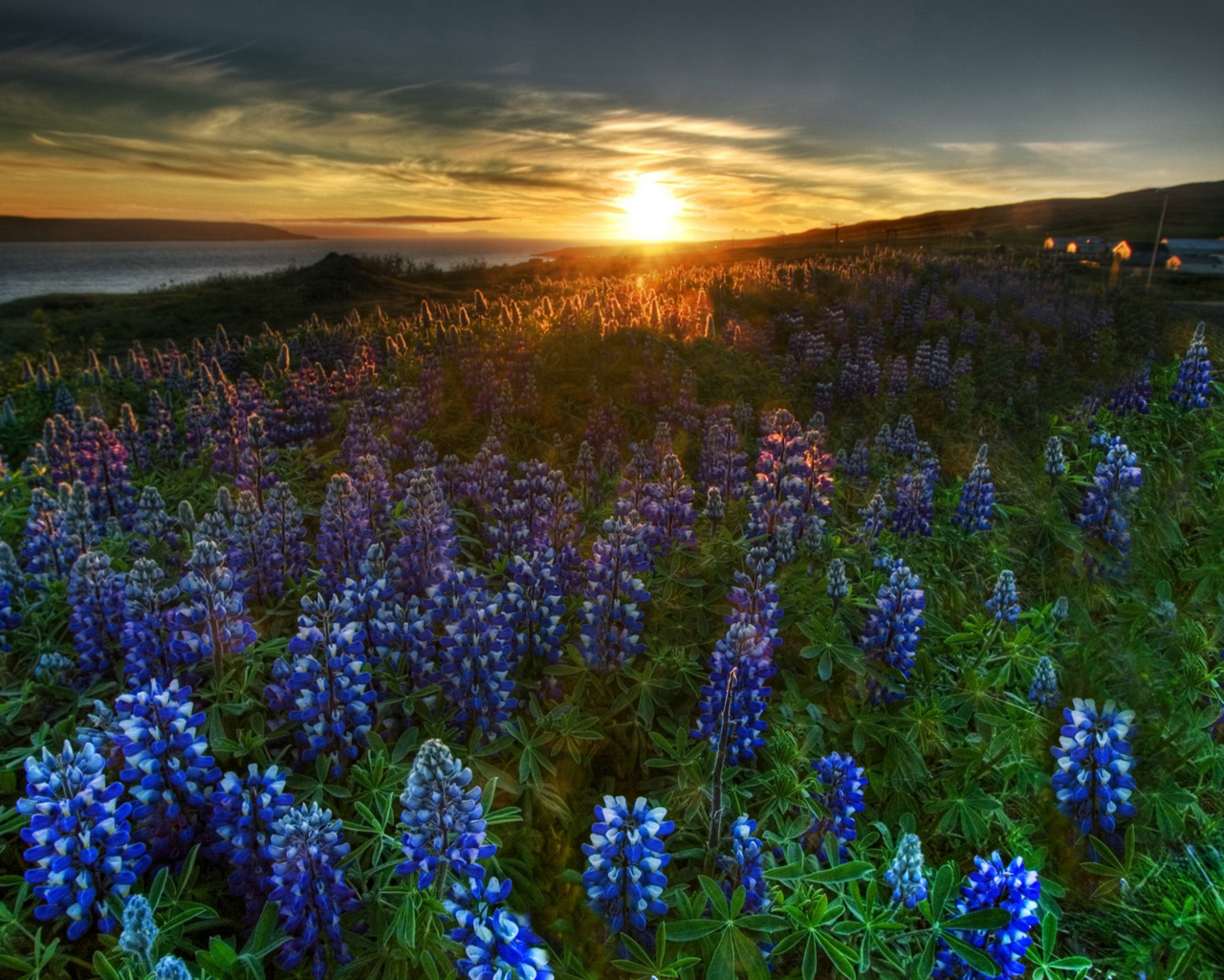 Lavender Fields Wallpapers Lavender Fields Myspace Backgrounds 1280x1024