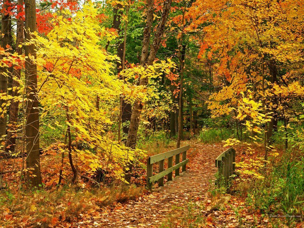 Wallpaper Beautiful Autumn Season Wallpapers HD 1024x768