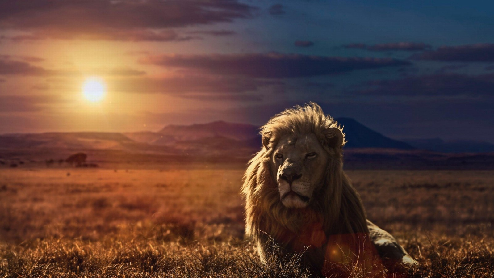 Free Download Lion Hd Wallpapers Lion Hd Pictures Download Hd 1600x900 For Your Desktop Mobile Tablet Explore 74 Lion Wallpaper Desktop White Lion Wallpaper Desktop Mountain Lion Desktop Wallpaper