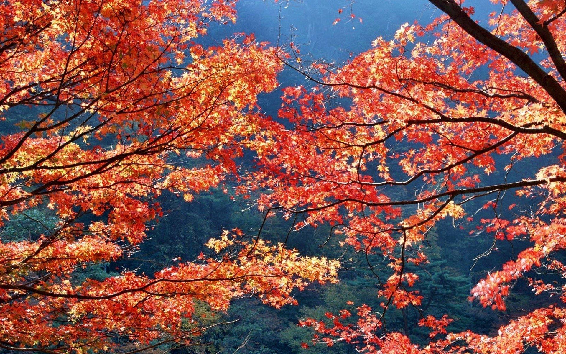 1920x1200 japan autumn season leaves wallpaper 1920x1200 29666 1920x1200