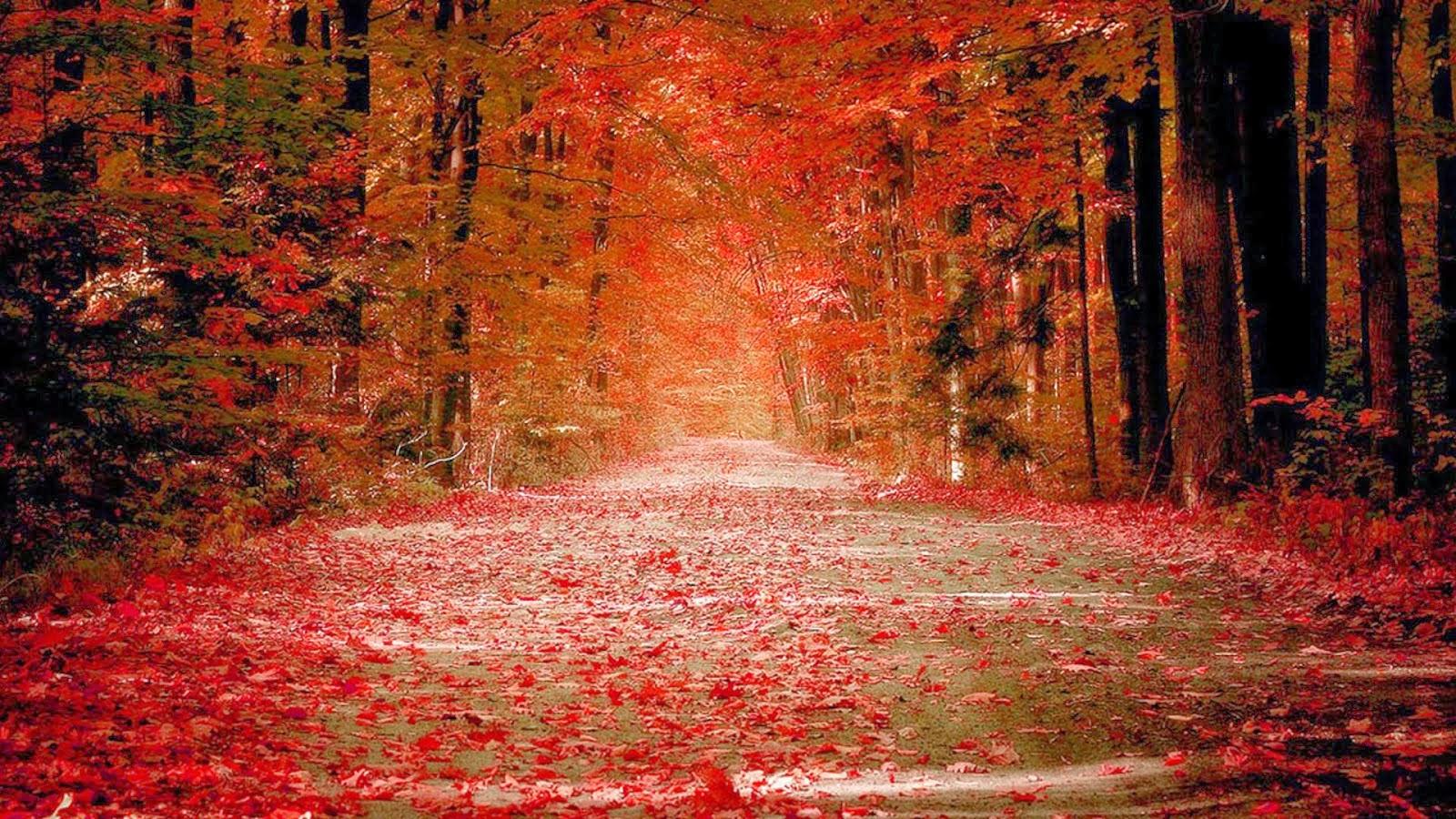 autumn nature hd wallpaper 1080p autumn nature hd wallpaper 1080p 1600x900