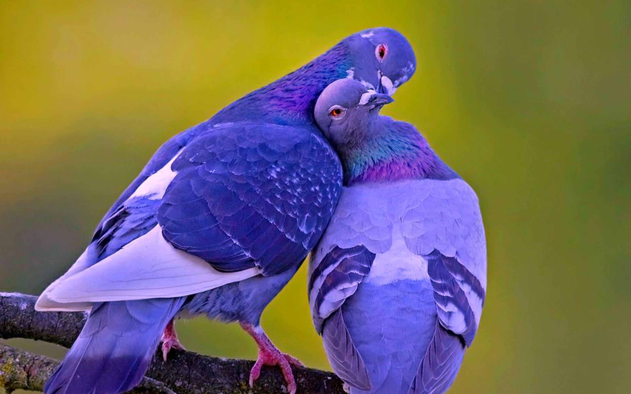 3D Love Birds 11 Wallpaper   Hdlovewallcom TOOL SHED 1 2560x1600