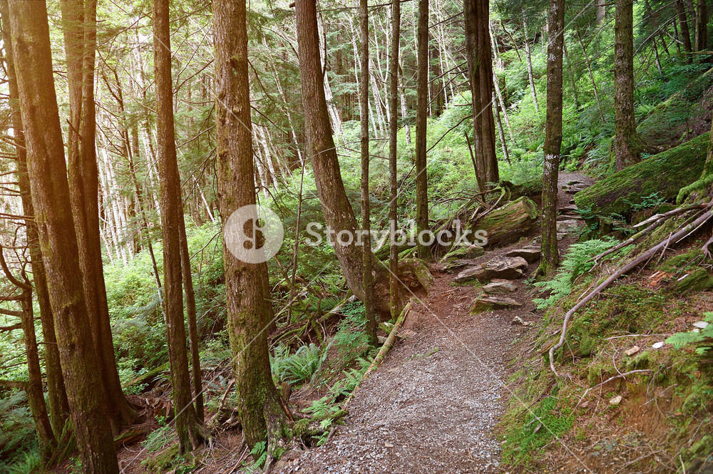 Hiking forest path in sunny day Trail in old forest background 1000x665