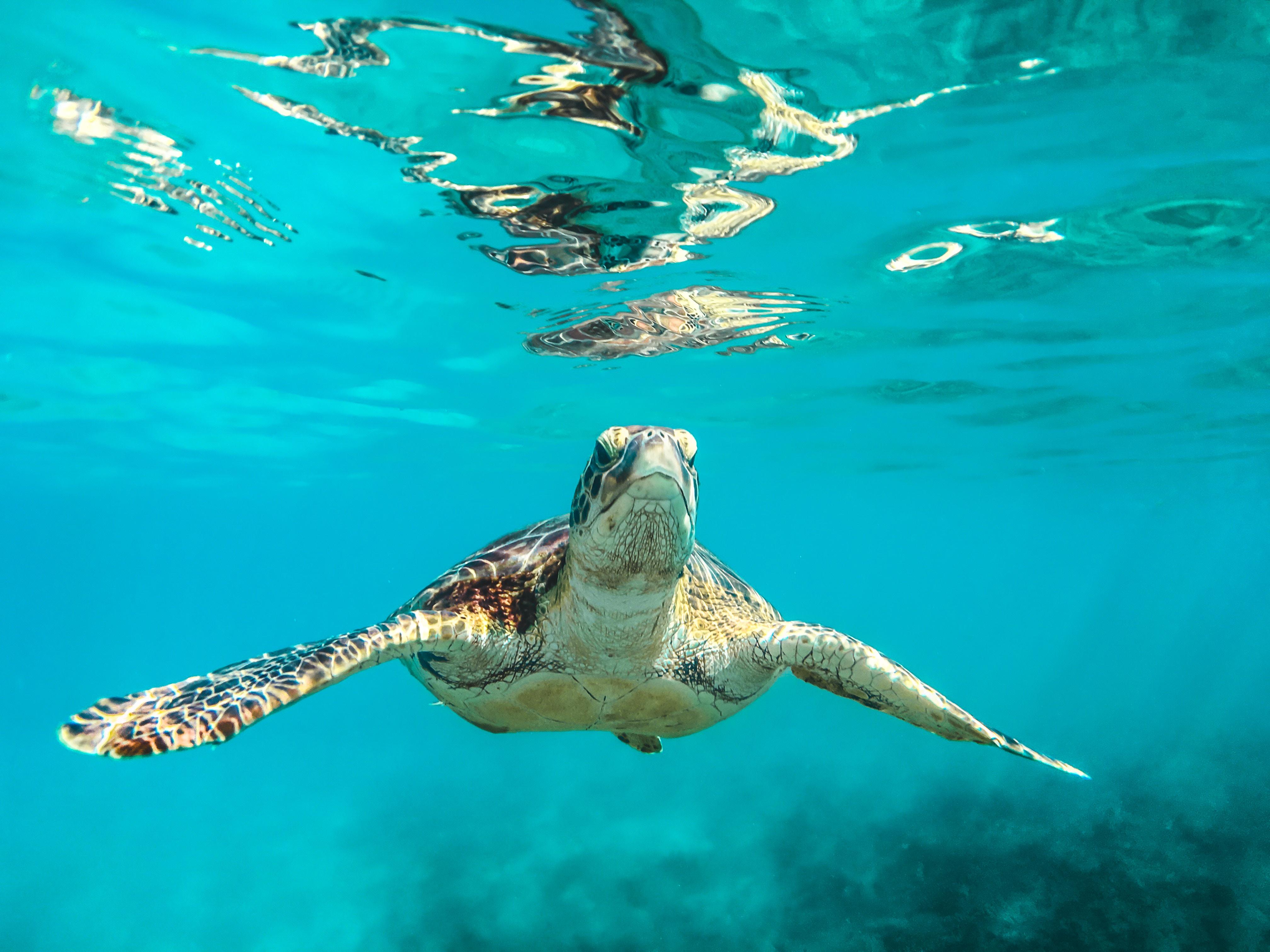 5308305 4032x3024 blue reflect swim aquatic turtle 4032x3024