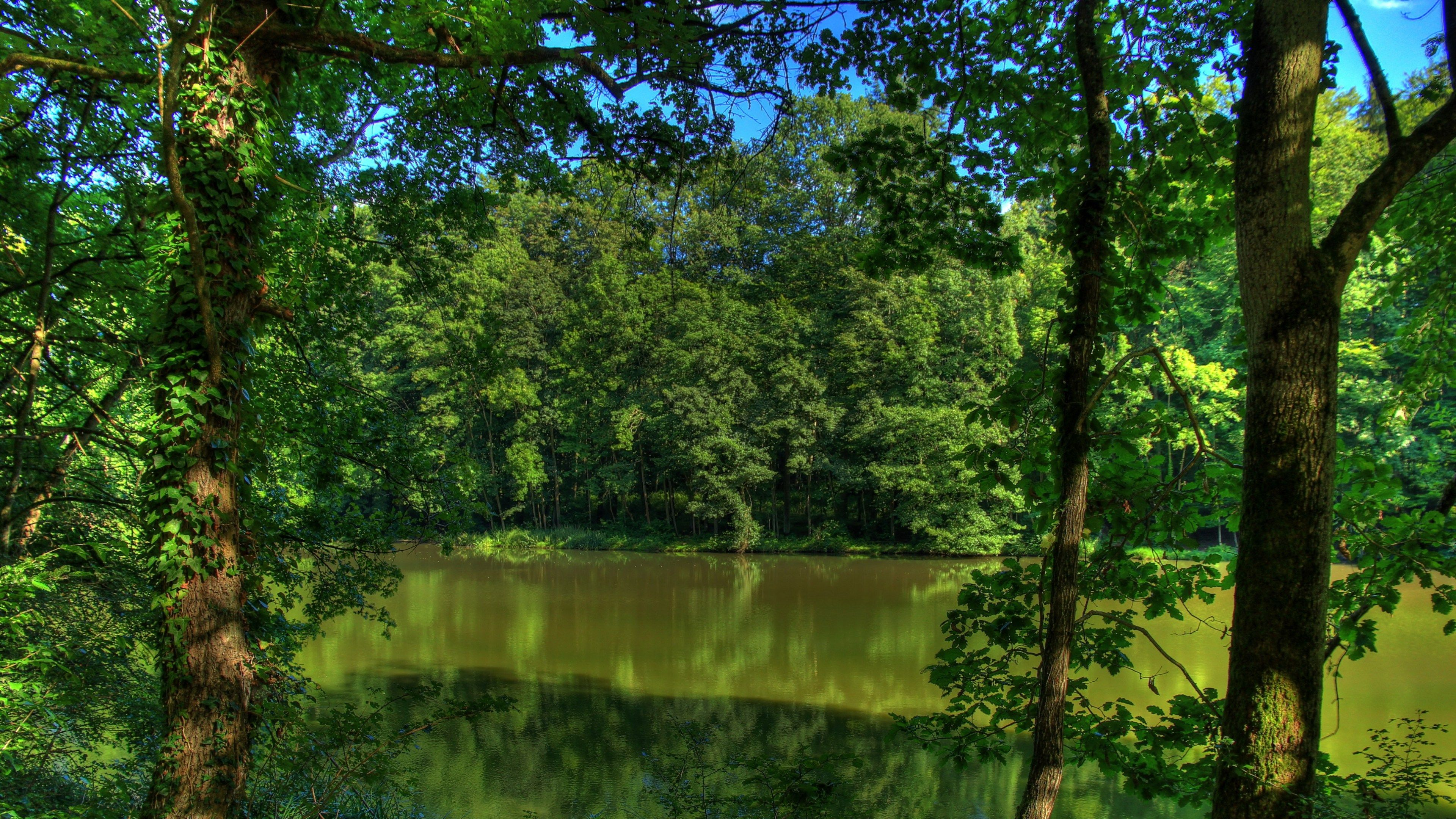 High Definition 100 Percent Quality Soothing Green Paintings 3840x2160