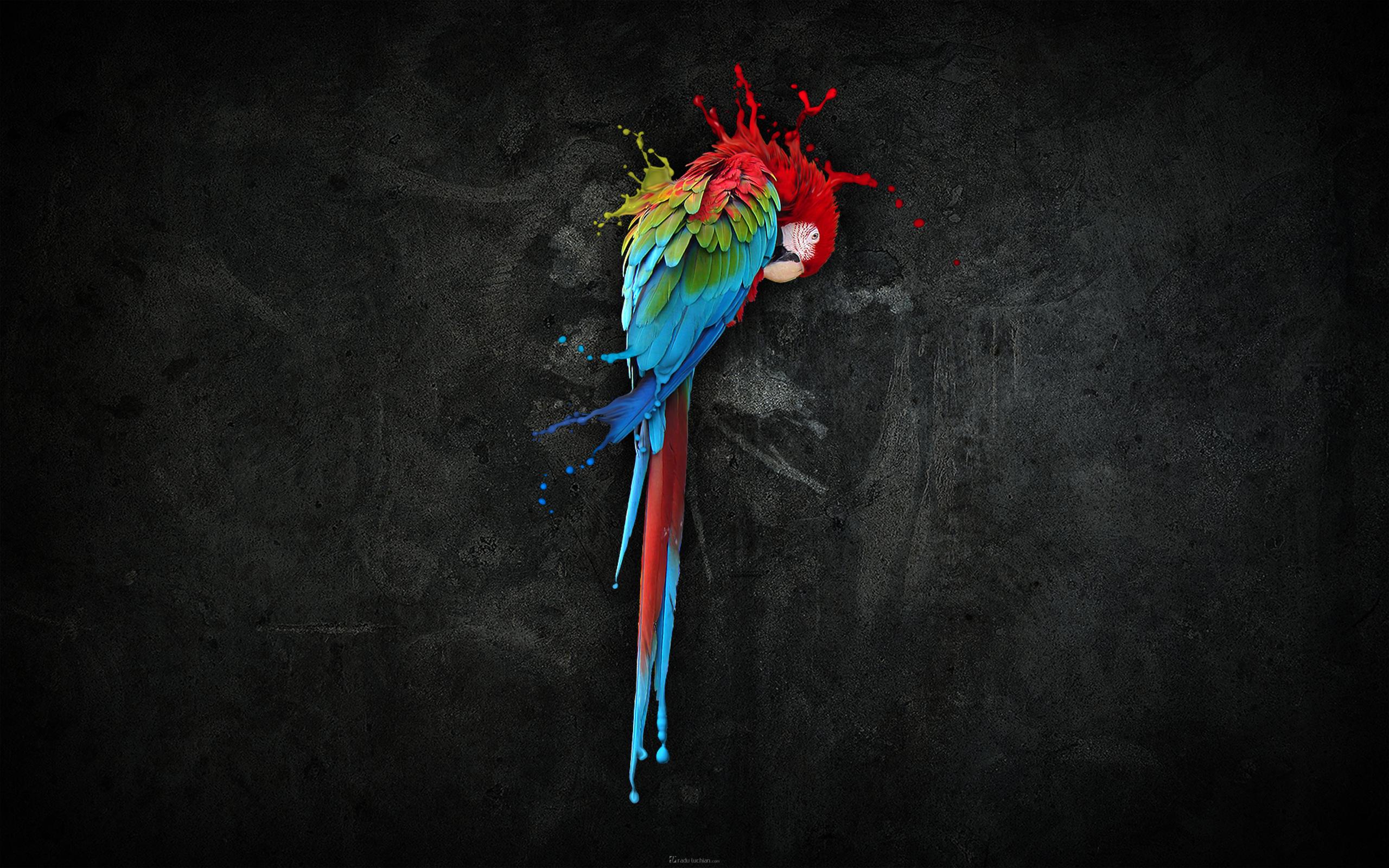 Wallpapers hd art impremedia amazing art wallpaper hd amazing parrot voltagebd Gallery