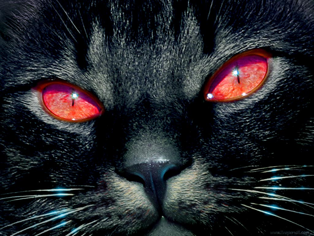 Eyes Wallpapers Blue Cat Eyes Yellow Cat Eyes Green Red Cats Eyes 1024x768