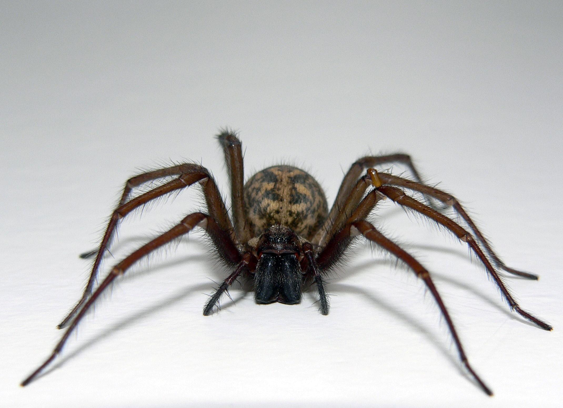 HD Cute Spider Wallpaper HD Wallpapers 2140x1552