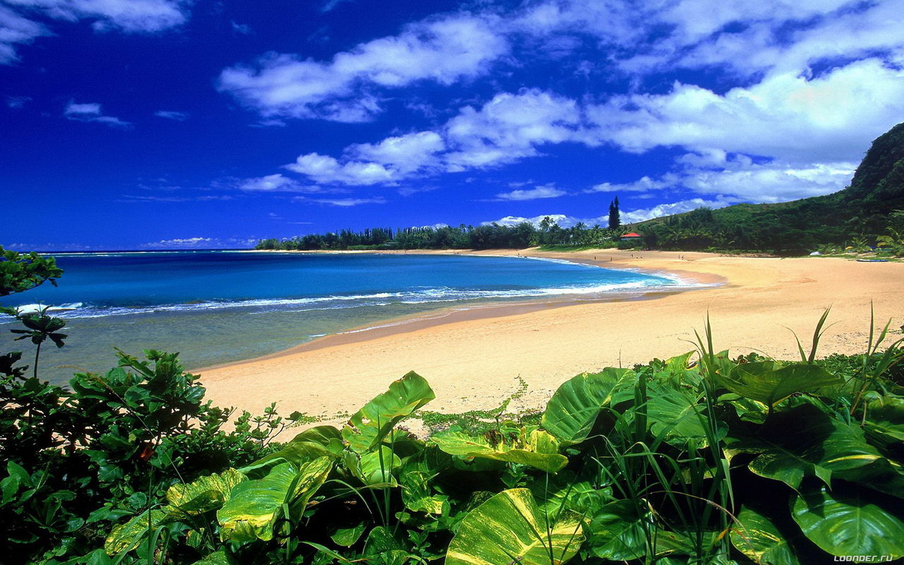 hawaii beach wallpaperjpg 1280x800