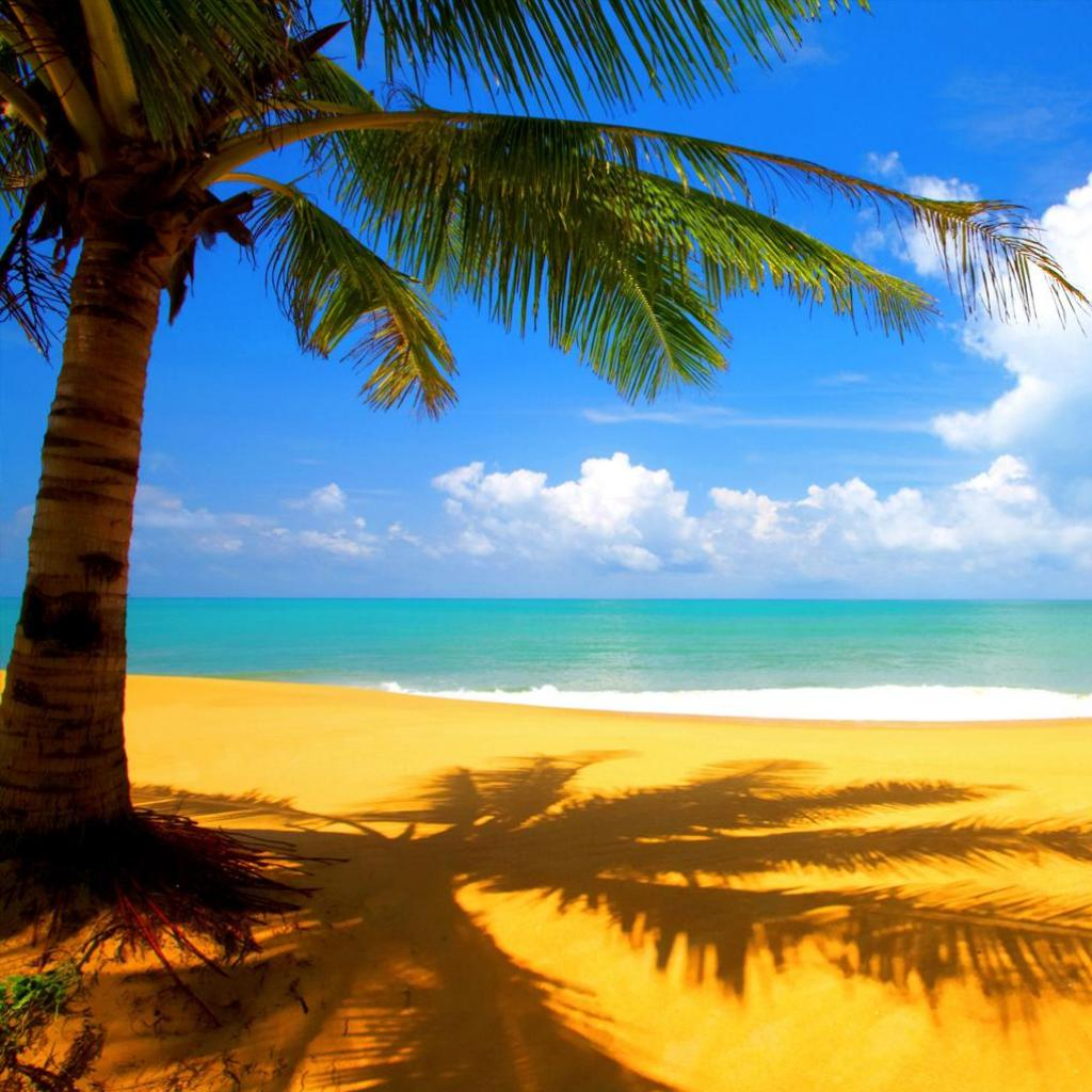 Palm Tree Wallpaper 8297 Hd Wallpapers in Beach   Imagescicom 1024x1024