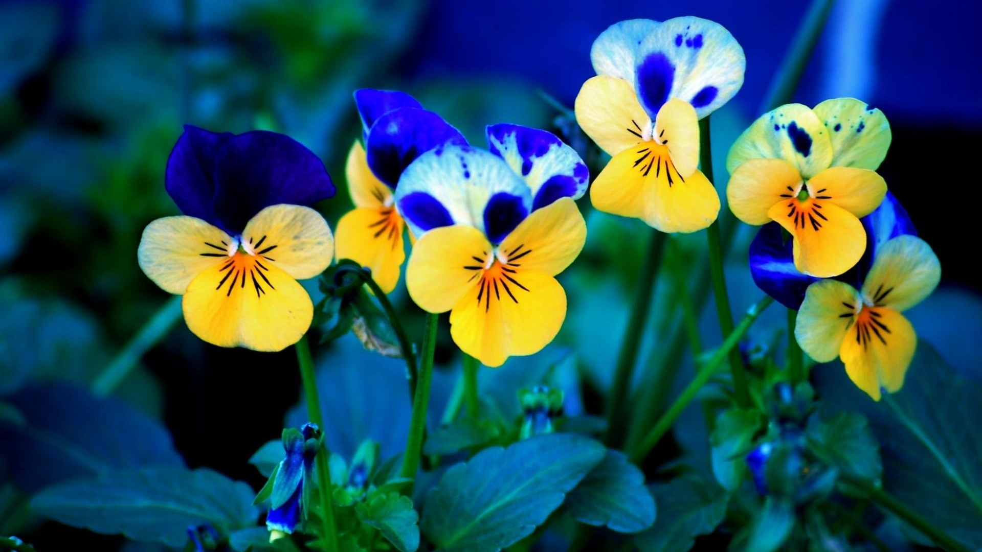 1920x1080 Spring Flowers desktop PC and Mac wallpaper 1920x1080