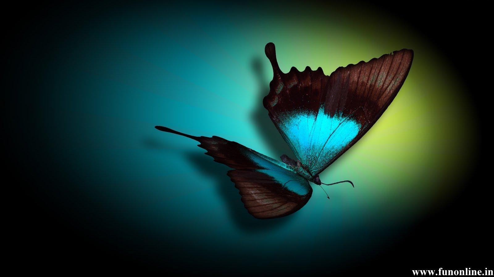 Blue Colored Butterfly With Black Background 1600x900