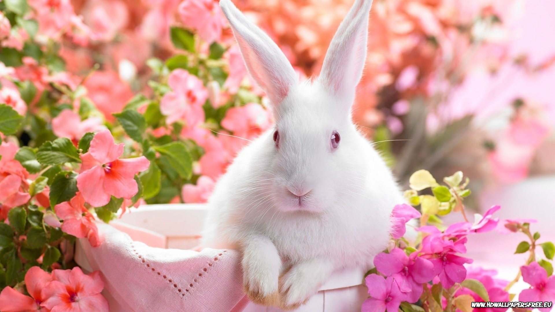 Cute Easter Bunny high definition wallpaper picture 1920x1080