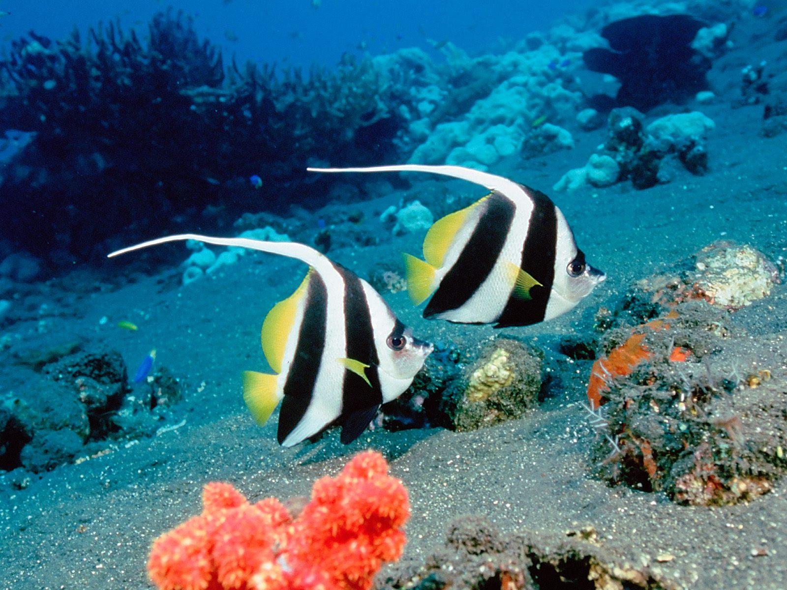 Deep Sea Underwater Wallpaper 1600x1200