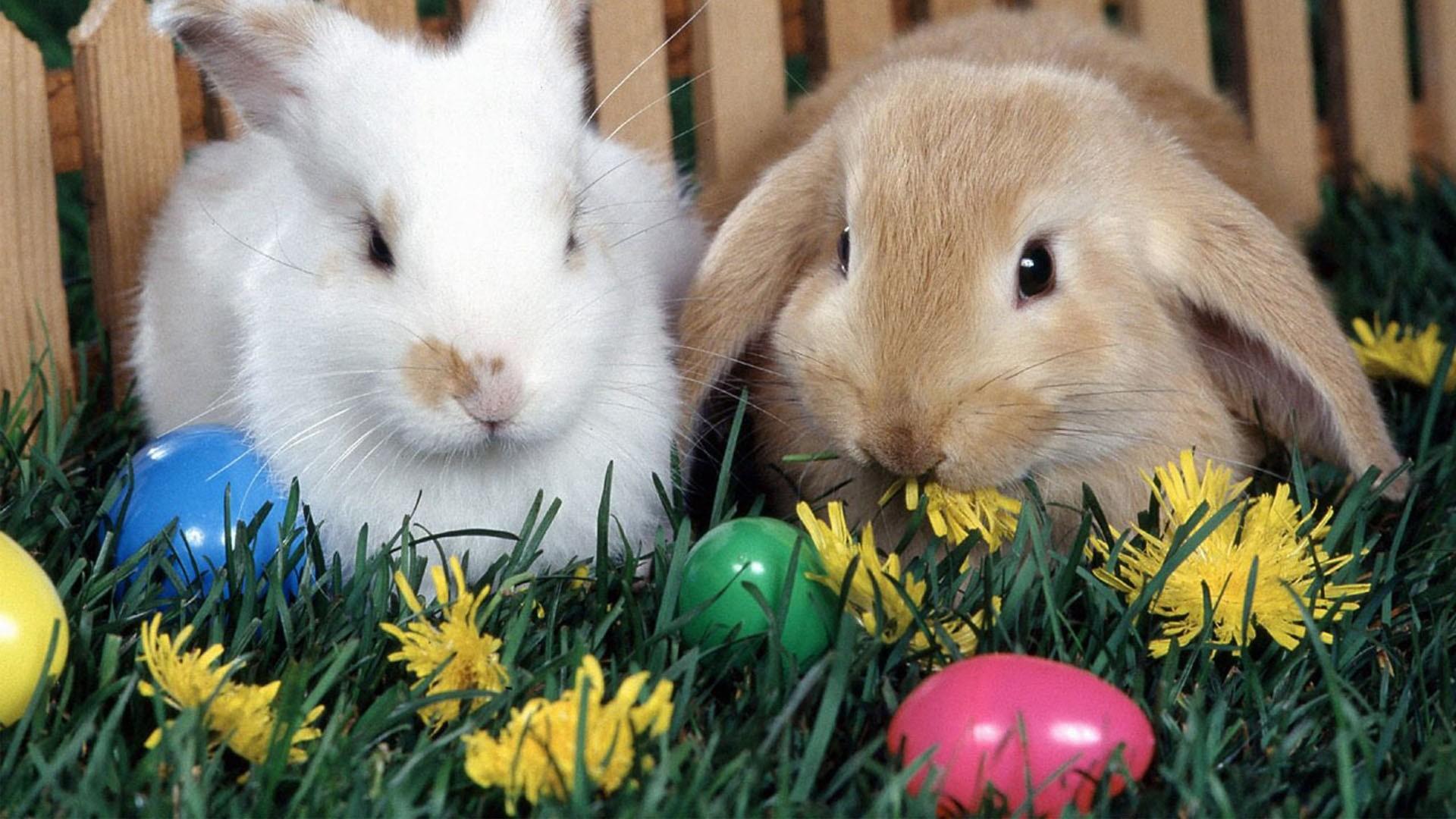 72 Easter Bunny Desktop Wallpaper On Wallpapersafari