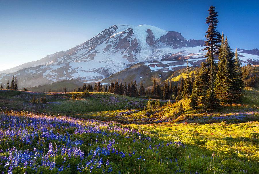 Mount Rainier wallpaper   ForWallpapercom 901x606