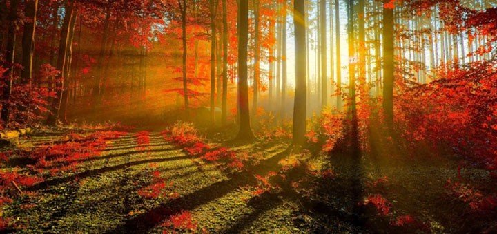 Change with the seasons with these amazing wallpapers 720x340